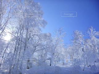 雪に覆われた木の写真・画像素材[899655]