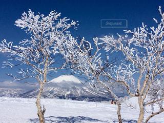 雪に覆われた木 - No.933493