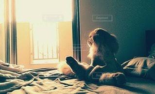 猫の写真・画像素材[32653]