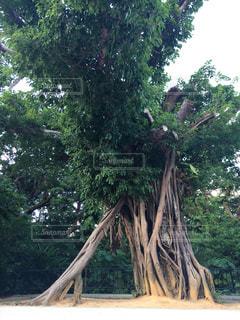 沖縄,樹木,旅行,やんばる