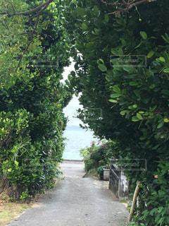 海,空,沖縄,岩,癒し,旅行,眺め