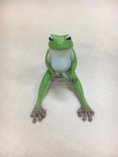 白い背景の上の緑のカエルの写真・画像素材[899937]