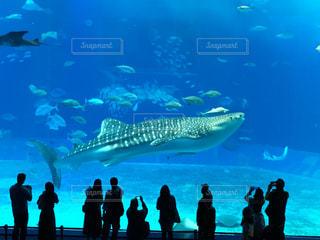 水の中の魚の群れを見ている人の群衆の写真・画像素材[907223]