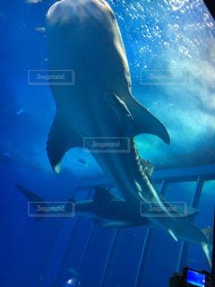 水面下を泳ぐ魚たちの写真・画像素材[907228]