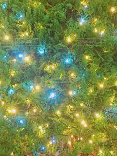 花,黄色,光,イエロー,グリーン,色,LED,電飾,色鮮やか