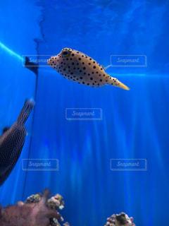 魚の写真・画像素材[2479361]