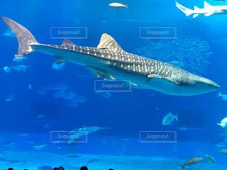 魚の写真・画像素材[2479398]