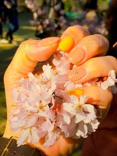 花,春,桜,ネイル,手,人