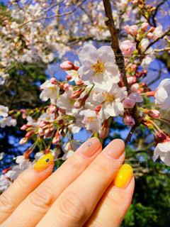 女性,花,ネイル,手,花見,春ネイル,桜色ネイル