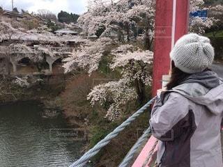 桜の写真・画像素材[3064497]
