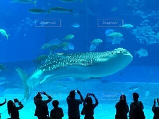 水の下で泳ぐ魚を歩いている人々のグループの写真・画像素材[3898421]