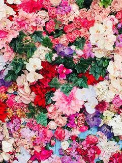 花のクローズアップの写真・画像素材[4401025]
