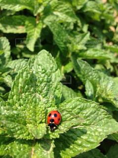 緑の葉のクローズアップの写真・画像素材[4410793]