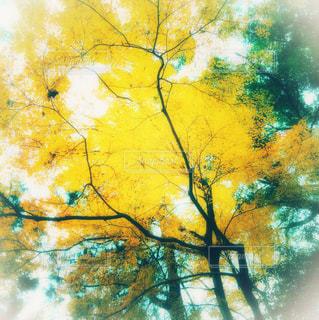 近くの木のアップの写真・画像素材[1651523]
