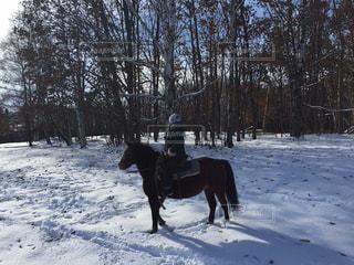 雪の中で馬に乗る人の写真・画像素材[896880]