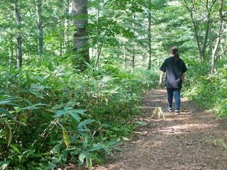 森の木の隣に立っている男の写真・画像素材[3607647]