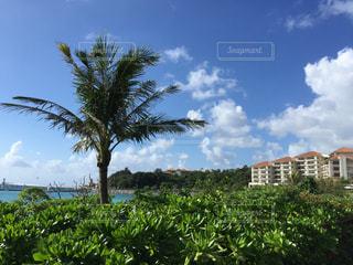 空,夏,屋外,緑,南国,白,雲,沖縄,樹木,夏休み,リゾート,めんそーれ
