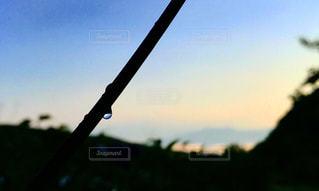 自然,夕焼け,水滴,シルエット