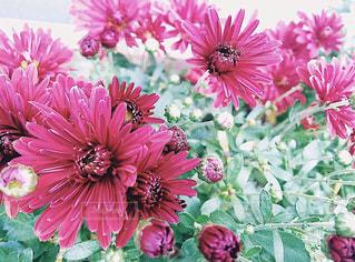 植物にピンクの花の写真・画像素材[899046]