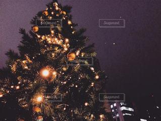 夜ライトアップされたクリスマス ツリーの写真・画像素材[905804]