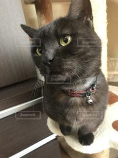 愛猫の写真・画像素材[991168]