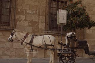 スペイン。の写真・画像素材[939959]
