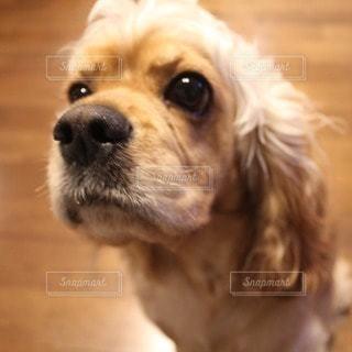犬の写真・画像素材[28611]