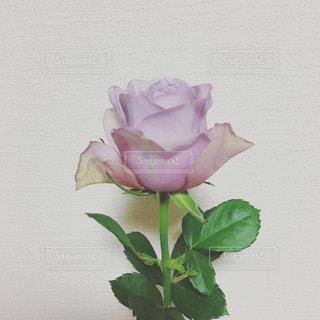 花瓶の花束の写真・画像素材[1202552]