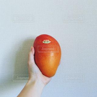 リンゴを持っている手の写真・画像素材[1205516]