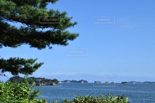 樹木と海の写真・画像素材[918495]