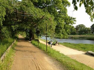 賀茂川沿いを自転車での写真・画像素材[907330]