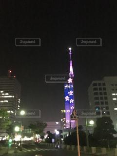 桜,福岡タワー,百道