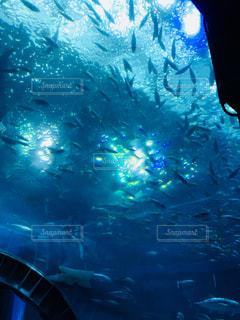 美ら海 沖縄 水族館 魚 旅行
