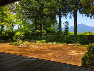 比叡山を借景にした庭園の写真・画像素材[909109]