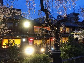 祇園白川のライトアップの写真・画像素材[912228]