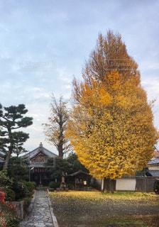 木の小さな家の写真・画像素材[926114]