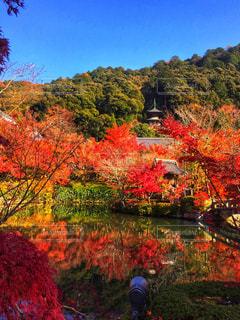 池の前のツリーの写真・画像素材[927466]