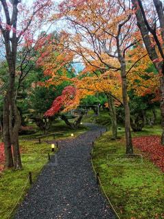 公園の木 - No.929754