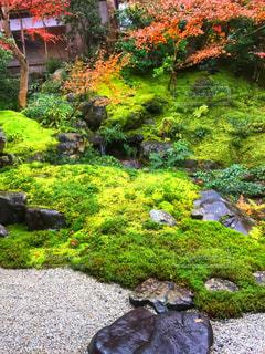庭に大きな滝+苔が山盛りの写真・画像素材[929784]