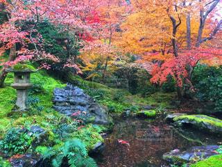 緑豊かな森の中の水と庭の写真・画像素材[929792]