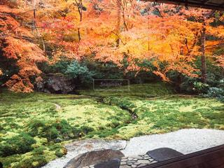 滝の横にあるベンチの写真・画像素材[929798]