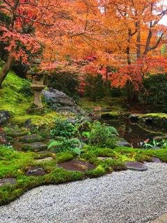 庭に大きな滝の写真・画像素材[929800]