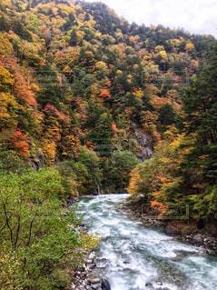 森を流れる川の写真・画像素材[942166]
