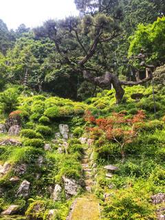 庭園の緑の植物の写真・画像素材[948121]