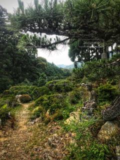近くの木の横にある丘の中腹の写真・画像素材[948126]