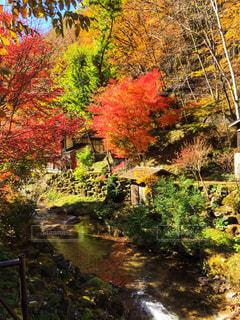 滝の横にあるツリーの写真・画像素材[1023702]
