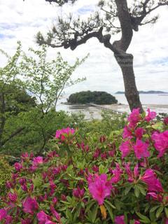 植物にピンクの花の写真・画像素材[1140475]