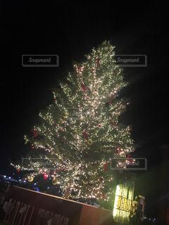 イルミネーション,キラキラ,クリスマス,ツリー