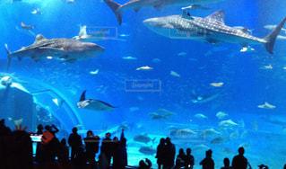 美ら海水族館の写真・画像素材[904123]