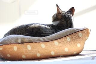 猫,かわいい,綺麗,後ろ姿,美しい,ねこ,背中,キジトラ,ネコ,もふもふ